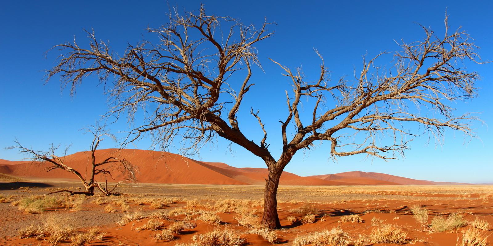 Sossusvlei tree